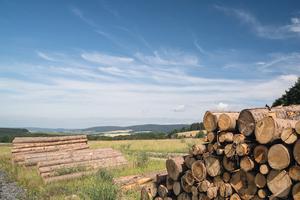 "<div class=""bildtext"">Ausholzung oder Durchforstung der Maßnahmenfläche zur Vorbereitung zur Wiederherstellung einer Bergwiese oder Waldumbau</div>"